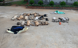Tin mới nhất vụ đôi nam nữ cầm đầu đường dây tẩm chất độc xyanua vào cá khô khiến chó mèo chết la liệt
