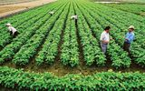 Tình huống pháp luật - Cán bộ, công chức có được mua đất nông nghiệp không?