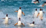Cộng đồng mạng - Video: Khám phá hòn đảo chỉ có cặp vợ chồng sống cùng 10.000 con chim cánh cụt