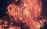 Pháp luật - Vụ cháy rừng ở Nghệ An: Triệu tập một phụ nữ để điều tra