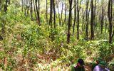 Nghệ An: Phát hiện thanh niên chết trong tư thế treo cổ trên đồi thông