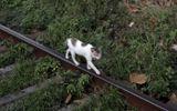 """Cộng đồng mạng - Tin tức đời sống mới nhất ngày 12/8/2020: Mèo """"buôn lậu ma túy"""" trốn thoát khỏi nhà tù"""