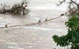 Video-Hot - Video: Đàn khỉ hơn 50 con vắt vẻo đu thang dây để qua sông sau mưa lớn