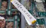 Tin thế giới - Trung Quốc lại phát hiện virus corona trên bao bì hải sản đông lạnh