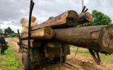 Tin trong nước - Gia Lai: Phát hiện âm tặc dùng xe độ chế chở gỗ lậu