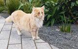 """Tin tức đời sống mới nhất ngày 24/8/2020: Mèo nổi tiếng New Zealand được đề cử """"gương mặt của năm"""""""