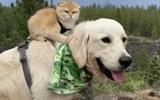 """Video: Cặp chó – mèo rủ nhau đi khắp thế gian """"đốn tim"""" dân mạng vì quá đáng yêu"""