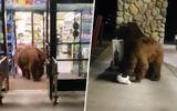 """Video: Tự nhiên """"như ruồi"""", chú gấu mò vào siêu thị kiếm ăn"""