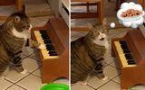 Video: Chú mèo đặc biệt chơi piano để giao tiếp với chủ nhân mỗi khi đói