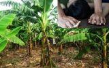 Tin tức pháp luật mới nhất ngày 28/8/2020: Đặc điểm nhận dạng kẻ hiếp dâm bé gái trong vườn chuối ở Hà Nội