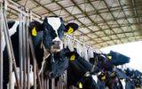 Vì sao NutiFood tự tin tuyên bố sữa đạt chuẩn cao thế giới?