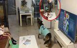 """Video: Chú chó ra hiệu cô chủ tắt tivi gấp, cảnh tượng sau đó khiến ai nấy """"cười bò"""""""
