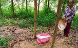 Vụ bé gái sơ sinh bị bỏ rơi ngay bìa rừng: Mảnh giấy trong giỏ nhựa màu hồng có nội dung gì?