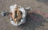 """Tin thế giới - Giật mình phát hiện vật thể trông như """"bộ não"""" bí ẩn trôi dạt vào bờ biển nước Mỹ"""