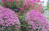 Truyền thông - Thương hiệu - Phát hiện thiên đường sống ảo với background hoa cỏ lãng mạn nhất Quy Nhơn