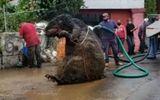 Cộng đồng mạng - Hoảng hồn phát hiện con chuột to bằng con bò đang ngồi trong đường ống nước ngầm
