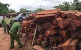 """Pháp luật - Gia Lai: Bắt giam đối tượng mua gỗ lậu """"khủng"""" rồi bán cho doanh nghiệp tư nhân"""
