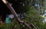 Tin trong nước - Cần Thơ: Bơi xuồng đi cắm câu, người đàn ông bị cây đè tử vong