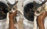 Vừa khởi động máy giặt, cô gái kinh hãi phát hiện vật bên trong, hốt hoảng giải cứu