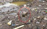 Tá hỏa phát hiện thi thể người đàn ông nổi trên sông Hồng