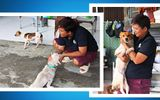 Người phụ nữ nguyện cả đời cứu giúp chó mèo hoang
