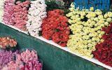 """Cận ngày 20/10, giá hoa tươi tăng """"chóng mặt"""" vì khan hàng"""