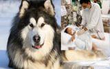 Sức khoẻ - Làm đẹp - Tin tức đời sống mới nhất ngày 22/10/2020: Bé trai 2 tuổi bị chó Alaska cắn rách khí quản