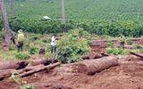 An ninh - Hình sự - Chuyển đổi đất rừng trái phép, Công ty An Phú Nông bị phạt 251 triệu đồng