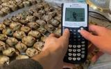 Video: Tạo dòng điện chạy máy tính cầm tay từ 45kg khoai tây chín