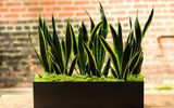 Cuối năm, muốn đổi vận đừng quên trồng 4 loại cây này trong nhà
