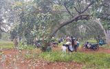 Vụ thanh niên đâm chết người ở ngôi nhà trong vườn điều: Khám nghiệm hiện trường