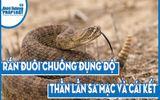 Video-Hot - Video: Rắn đuôi chuông đụng độ thằn lằn sa mạc và cái kết bất ngờ