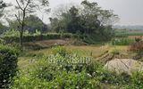 Bắc Giang: Phát hiện đôi nam nữ tử vong bất thường trong lều cá giữa cánh đồng