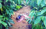 """Tin tức pháp luật mới nhất ngày 16/12: Tử hình đối tượng giết """"người tình"""" trong vườn cà phê"""