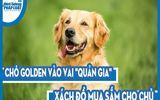 """Video: Chó Golden vào vai """"quản gia"""" xách đồ mua sắm cho chủ"""