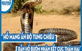Cuộc chiến sinh tồn: Hổ mang Ấn Độ tung chiêu, rắn hổ bướm nhận kết cục thảm hại
