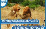 Video: 2 sư tử đực đang đánh nhau đầy máu lửa thì kẻ thứ 3 xuất hiện và cái kết đầy bất ngờ