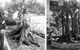 Cây khế kỳ lạ có 19 thân khiến giới chơi cây cảnh choáng váng