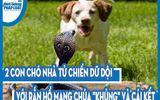 """Video: 2 con chó nhà tử chiến dữ dội với rắn hổ mang chúa """"khủng"""" và cái kết"""