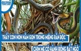 Video: Thấy con non nằm gọn trong miệng rắn độc, chim mẹ có hành động bất ngờ