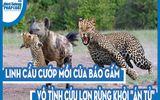 """Video: Linh cẩu cướp mồi của báo gấm, vô tình cứu lợn rừng khỏi """"án tử"""""""