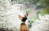 Sơn La: Hướng đi nào cho đề án phát triển du lịch huyện Mộc Châu đến năm 2025 và tầm nhìn đến năm 2030