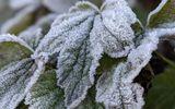Hình ảnh đỉnh Phia Oắc, Cao Bằng được băng giá phủ trắng trong nền nhiệt -2 độ C