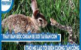 Video: Thấy rắn độc chuẩn bị xơi tái đàn con, thỏ mẹ lao tới điên cuồng tấn công