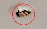 """Đang ở phòng tắm, ngước lên trần nhà, người phụ nữ phát hiện thấy 1 thứ khiến ai cũng """"nổi da gà"""""""