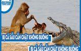"""Video: Bị cá sấu cắn chặt không buông, khỉ quyết """"tử chiến"""" và cái kết khó tin"""