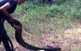 """Vụ rắn hổ mang chúa """"khủng"""" nặng 21kg ở Đồng Nai: Thanh niên được thuê vận chuyển với giá 200.000 đồng"""