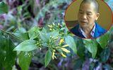 An ninh - Hình sự - Thiếu tá công an tiết lộ hành trình phá vụ dùng lá ngón đầu độc 5 người ở Tuyên Quang