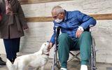 Tin thế giới - Cảm động cô chó ngoan ngoãn túc trực gần 7 ngày trước bệnh viện đợi chủ