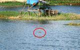 """Tin trong nước - Xuất hiện cá sấu """"khủng"""" giữa hồ nước ở Vũng Tàu: Nổi lên 3 lần trong 15 phút"""